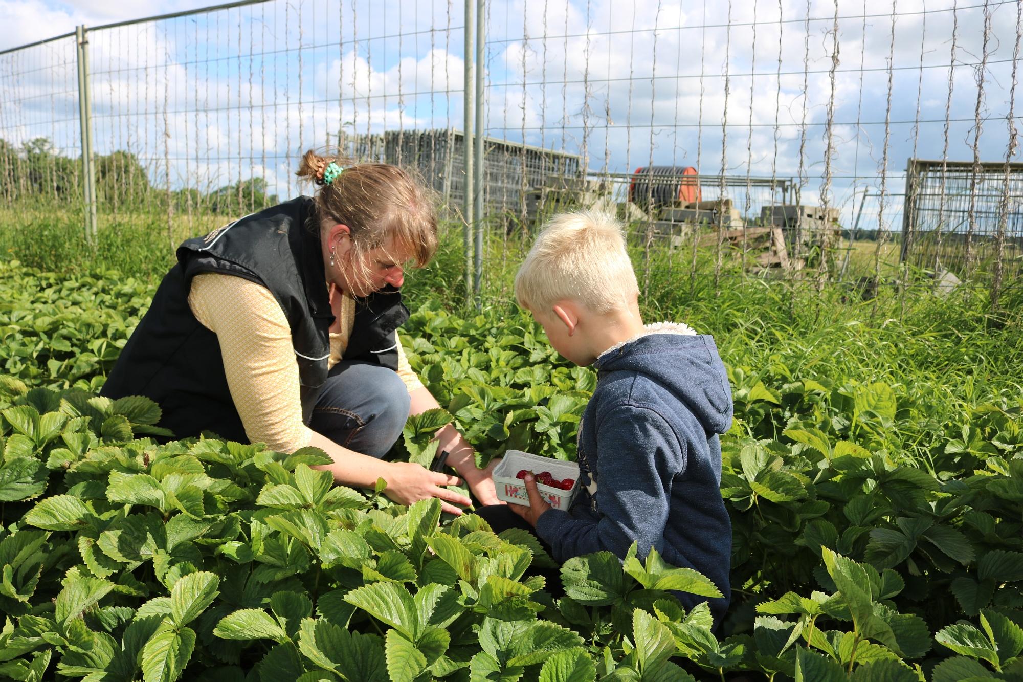 Besuch auf dem Urlaubs  und Früchtehof Schmörholm – Gemeinde Leck