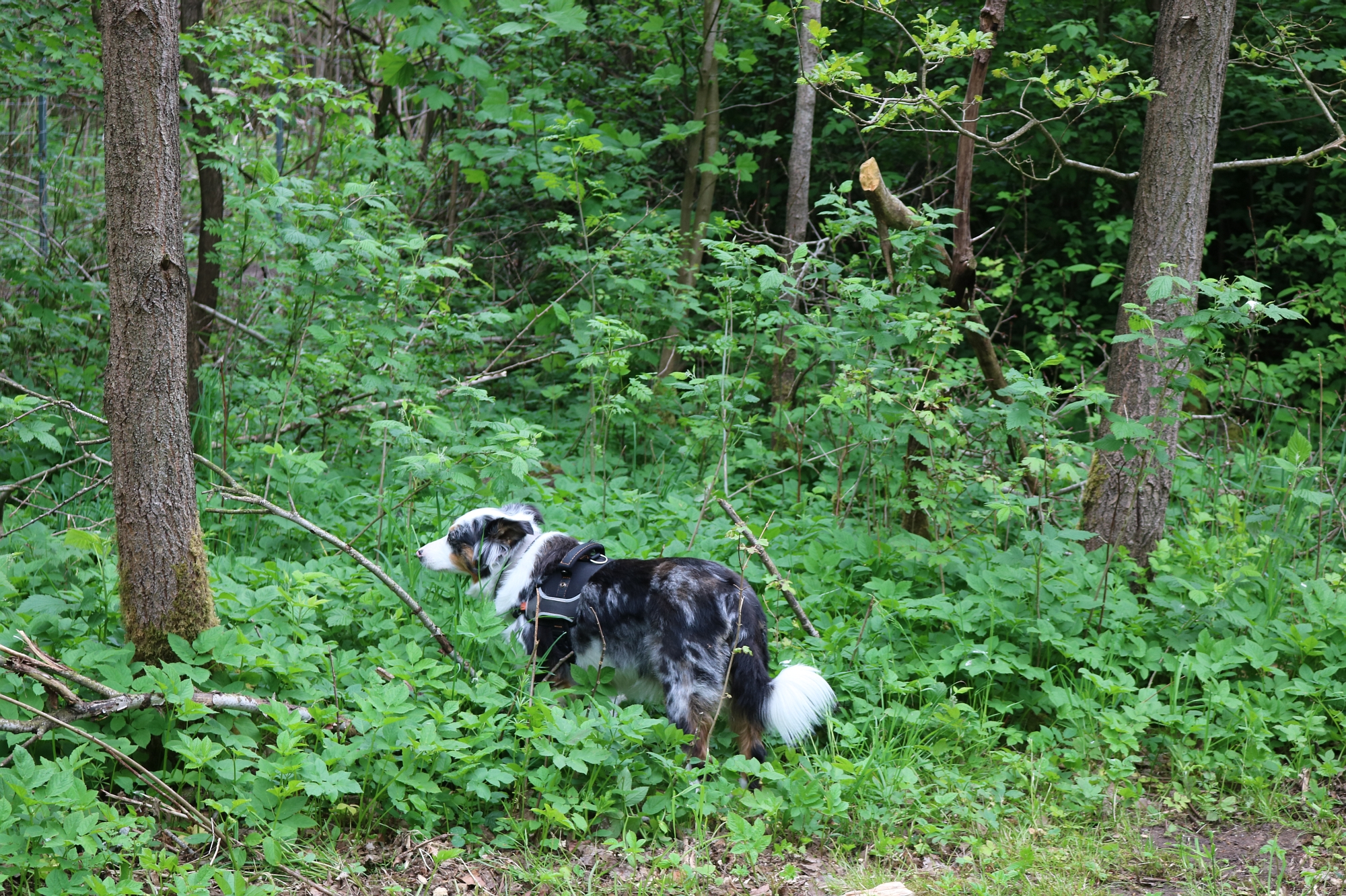 20200522 Hundefreilauf Sylter Weg 1