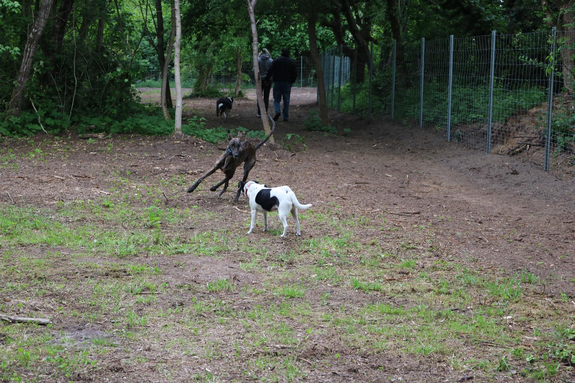 20200522 Hundefreilauf Sylter Weg 3