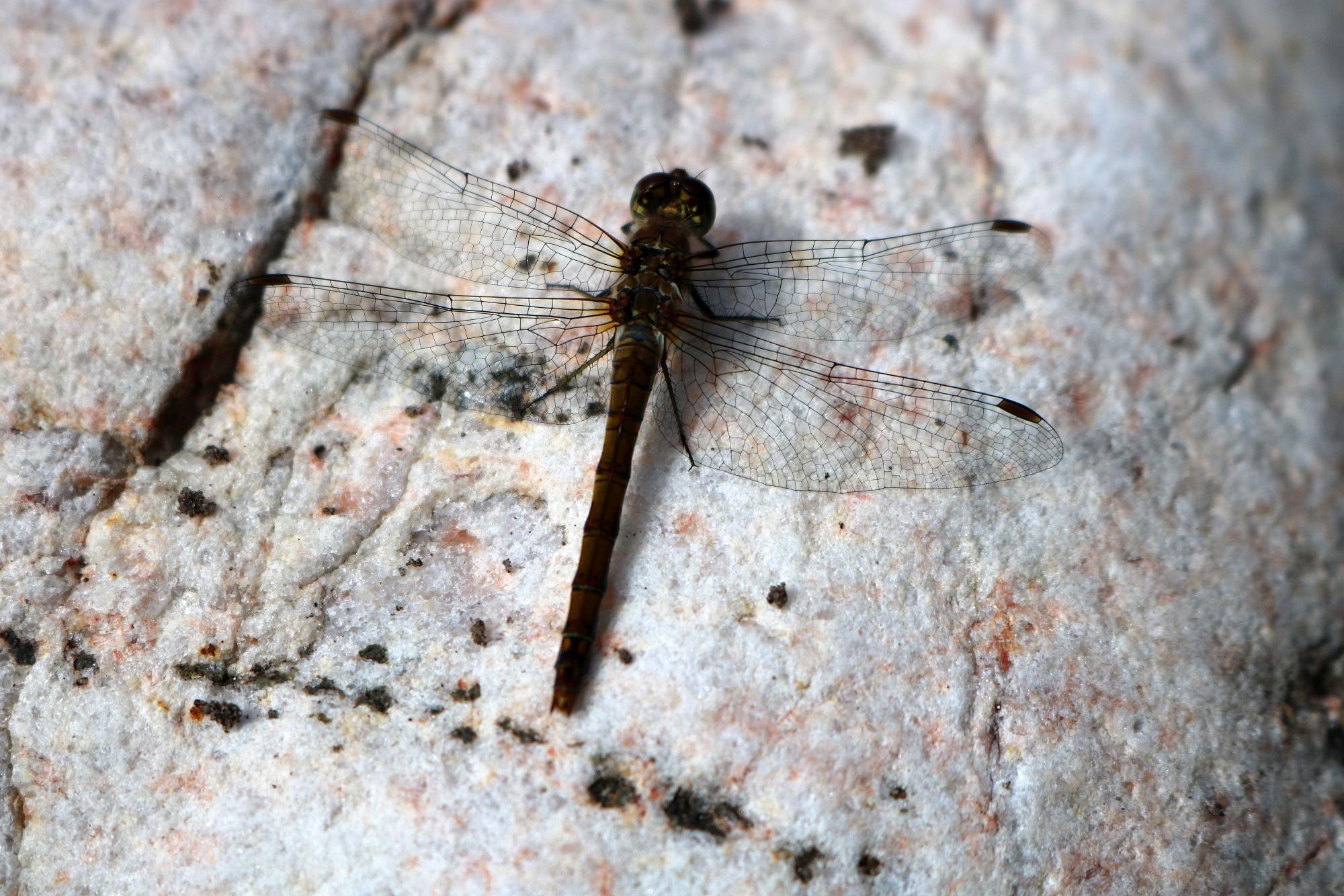202008 Kaiserhain Insektenhotel 1