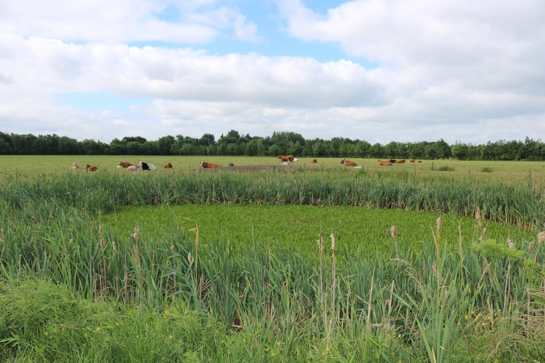 Abschnitt 1 Biotop Hyholmer Weg