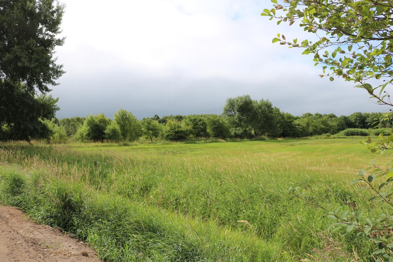 Abschnitt Kokkedahler Sumpf