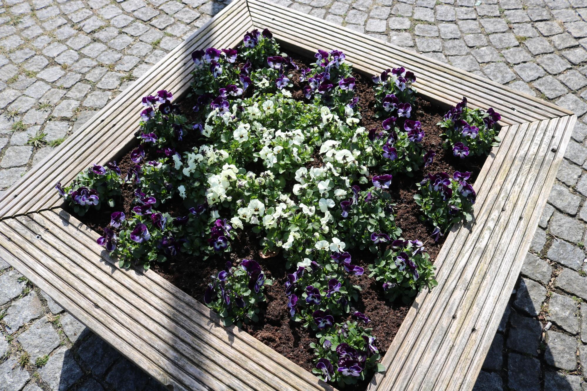 Thommys Blumenmarkt Blumenkasten 1
